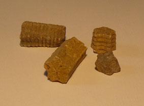 fossiles de pentacrines